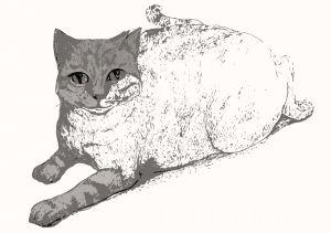 cat2 by My Portfolio