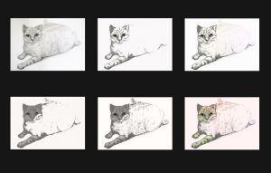 catt4 by My Portfolio