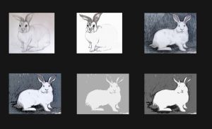 rabbits by My Portfolio