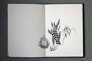(no title) plants study by Alexandra Vinck