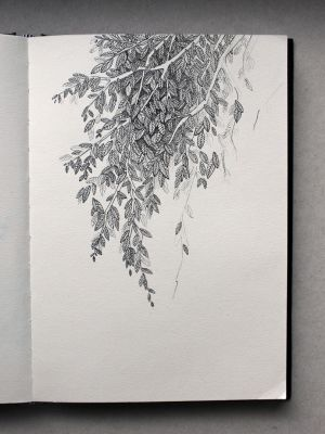 (no title) plant study by Alexandra Vinck