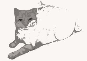 cat1 by My Portfolio
